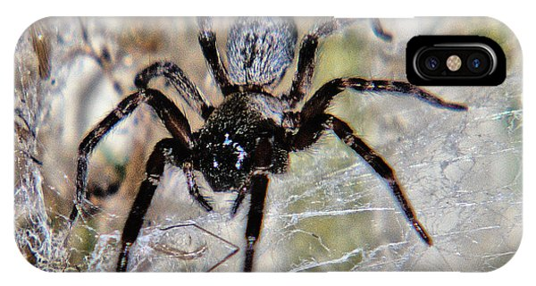 Australian Spider Badumna Longinqua IPhone Case