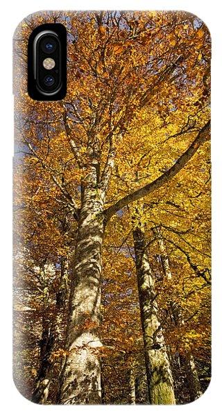 Autumn Colour Phone Case by Bob Gibbons