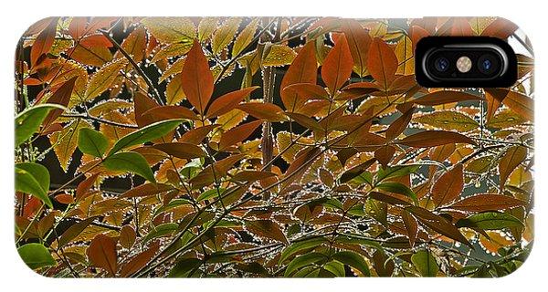 Autumn In Muttart IPhone Case