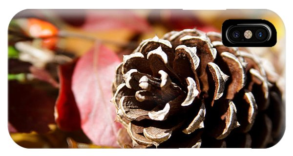 Autumn In Russet IPhone Case