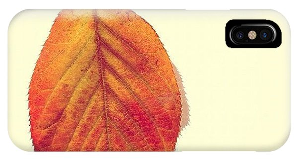 Orange iPhone Case - Autumn by Nic Squirrell