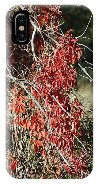 Autumns Red Vines IPhone Case
