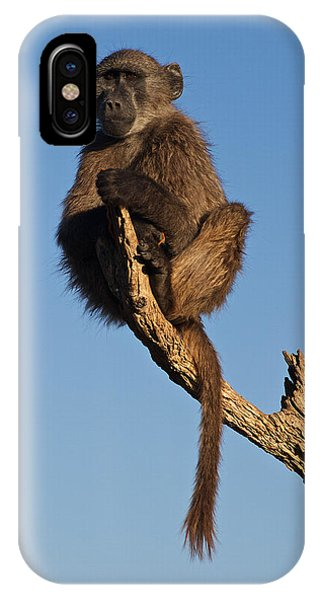 Baboon Sentry Namibia IPhone Case