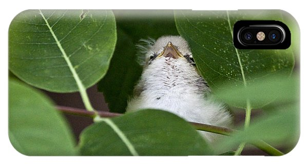 Baby Bird Peeping In The Bushes IPhone Case