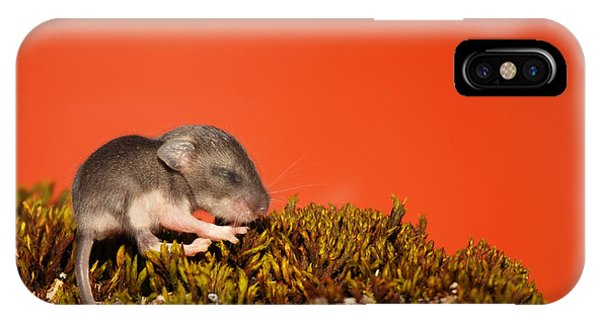 Baby Deer Mouse On Moss Phone Case by Max Allen
