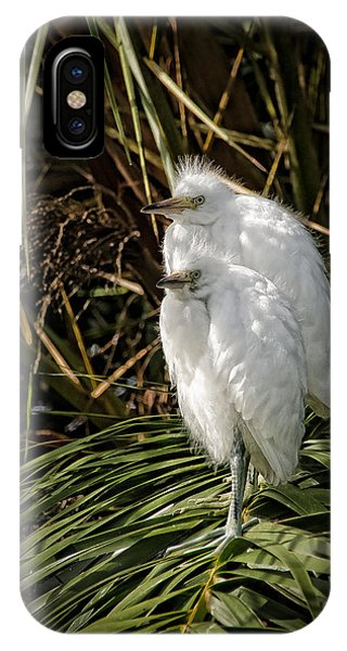 Baby Egrets IPhone Case