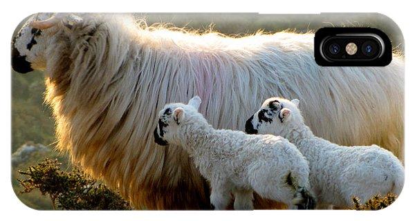 Baby-lambs IPhone Case