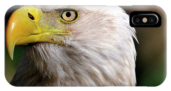 Bald Eagle Close Up IPhone Case