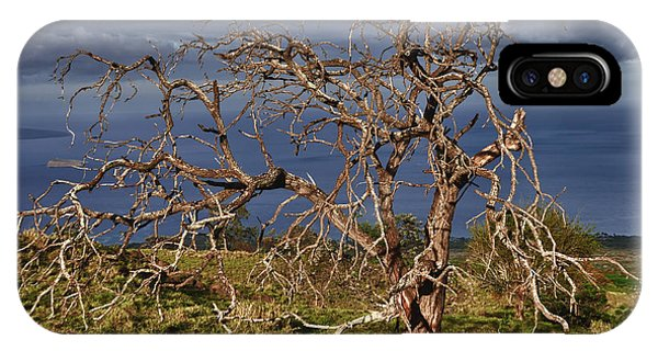 Bare Tree In Hana Maui IPhone Case