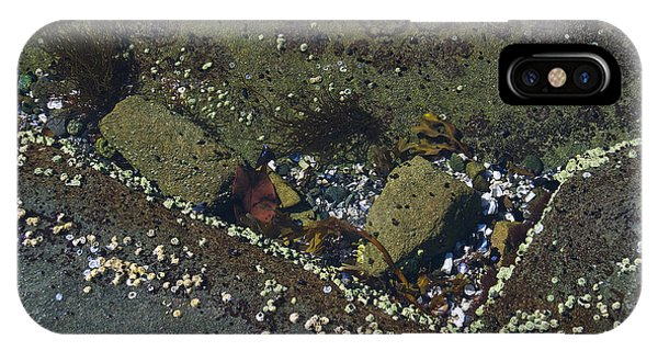 Barnacles And Rocks IPhone Case