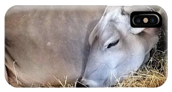 Ohio iPhone Case - Beautiful Brown Swiss by Natasha Marco