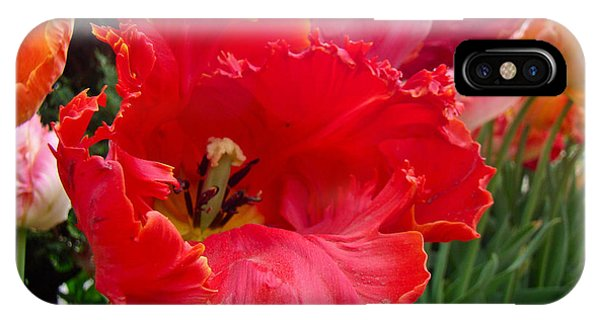 Beautiful From Inside And Out - Parrot Tulips In Philadelphia IPhone Case
