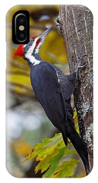Beautiful Pileated Woodpecker IPhone Case