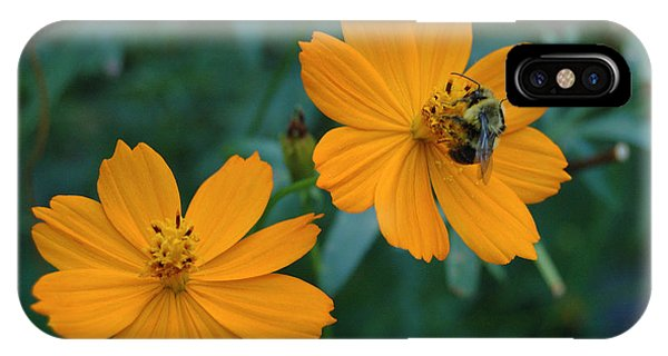 Bee On Cosmos Flower  IPhone Case