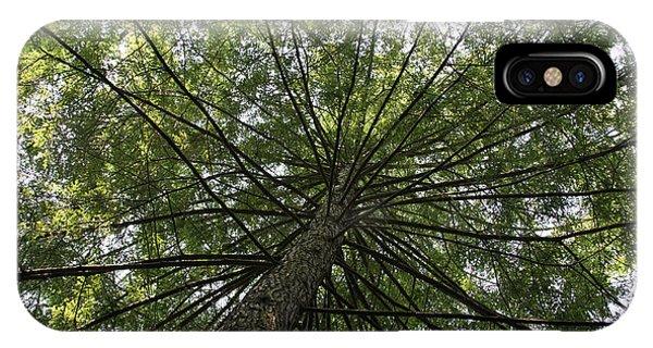 Beneath Tree IPhone Case