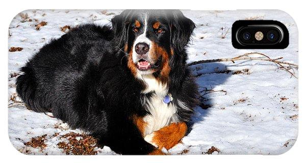 Bernese Mountain Dog iPhone Case - Bernese Mountain Dog Enjoys The Snow And Sunshine  by Gary Whitton