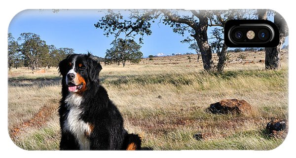 Bernese Mountain Dog In California Chaparral IPhone Case