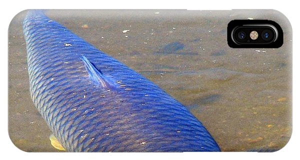 Big Blue Carp IPhone Case