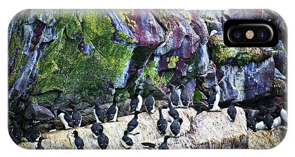 Razorbill iPhone Case - Birds At Cape St. Mary's Bird Sanctuary In Newfoundland by Elena Elisseeva
