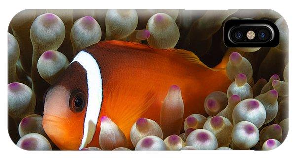 Amphiprion Melanopus iPhone Case - Black Anemonefish, Fiji by Todd Winner