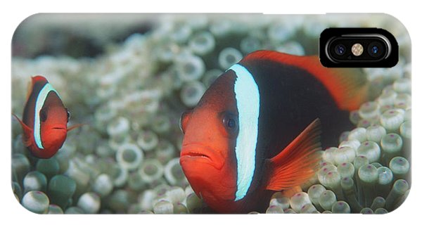 Amphiprion Melanopus iPhone Case - Black Anemonefish by Georgette Douwma