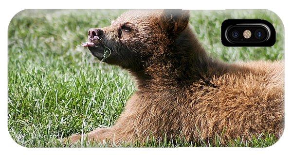 Black Bear Cub I IPhone Case