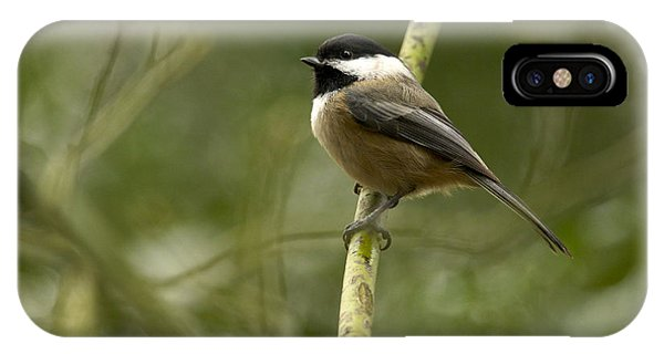 Black-capped Chickadee With Branch Bokeh IPhone Case