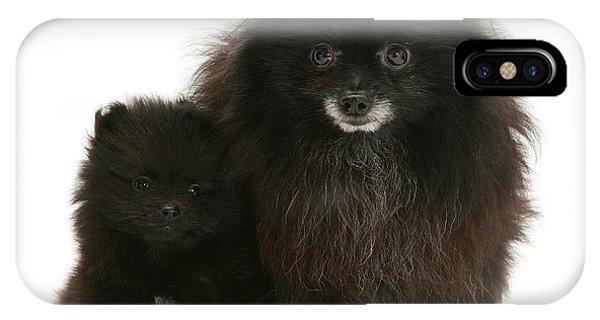 Pomeranian iPhone Case - Black Pomeranian And Puppy by Jane Burton