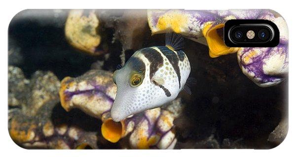 Black-saddled Pufferfish Phone Case by Georgette Douwma
