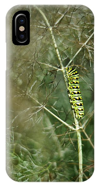 Black Swallowtail Butterfly Larva In Bronze Fennel IPhone Case