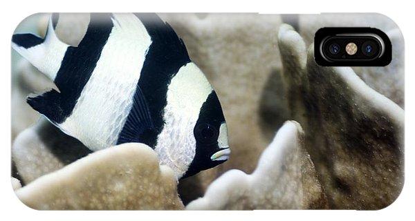 Black-tail Dascyllus IPhone Case