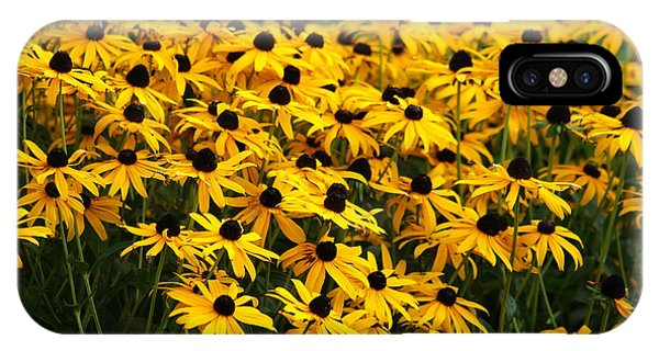 Blackeyed Susan IPhone Case