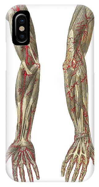 Blood Vessels Of The Arms, Artwork Phone Case by Mehau Kulyk