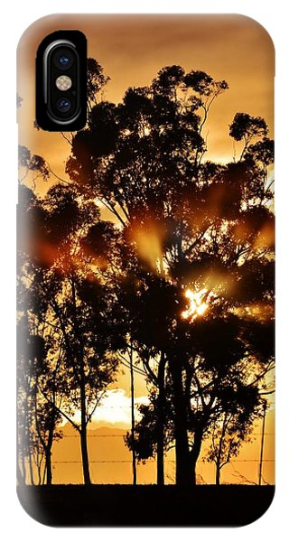 Blue Gum Trees IPhone Case