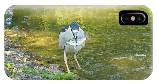 Blue Heron With Fish One IPhone Case