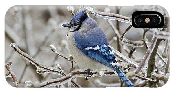 Blue Jay - D003568 IPhone Case
