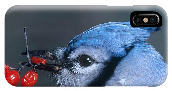 Blue Jay IPhone Case