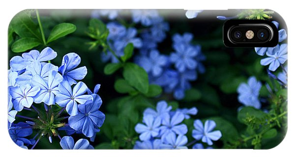 Blue Plumbago IPhone Case