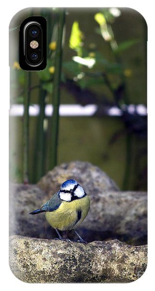 Titmouse iPhone Case - Blue Tit On Bird Bath by Jane Rix