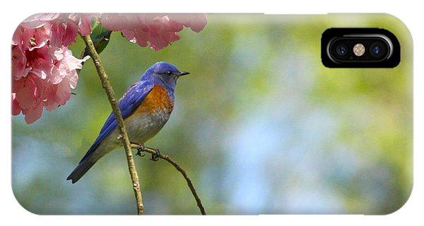 Bluebird In Cherry Tree IPhone Case
