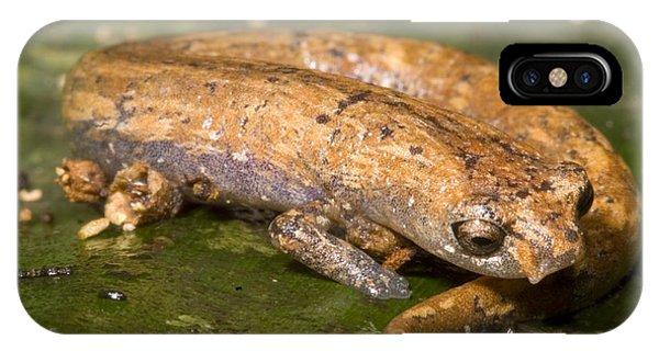 Bolitoglossine Salamander IPhone Case