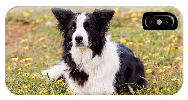 Border Collie In Field Of Yellow Flowers IPhone Case