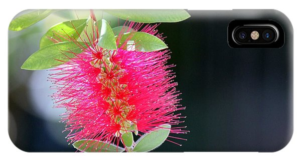 Bottlebrush Nectar IPhone Case