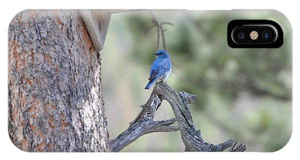 Boy Blue IPhone Case