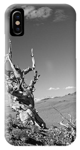 Bristlecone Pine And Cloud IPhone Case