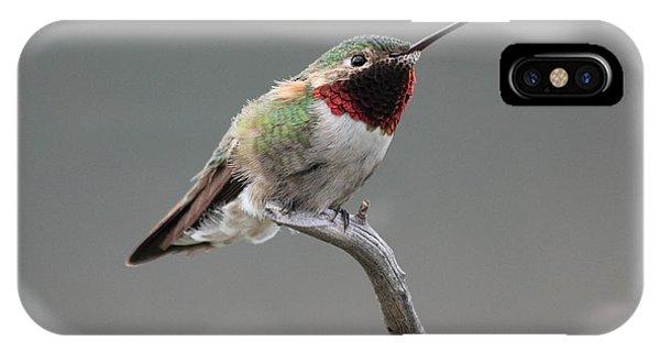 Broad-tailed Hummingbird IPhone Case