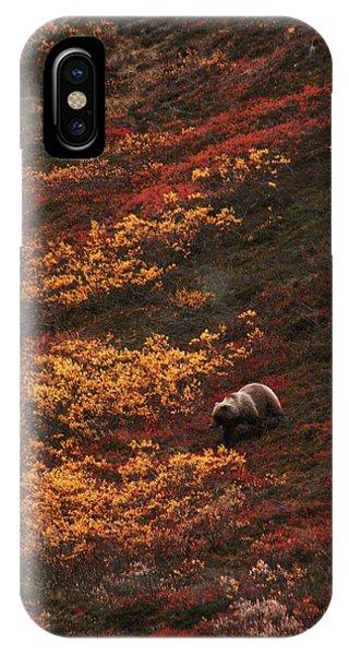 Brown Bear Denali National Park IPhone Case