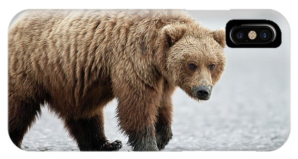 Brown Bear Stare IPhone Case