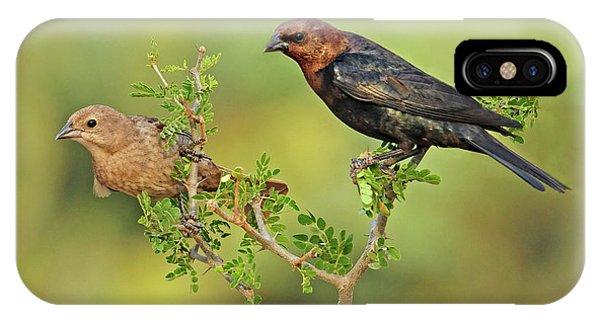 Brown Headed Cowbird Pair IPhone Case