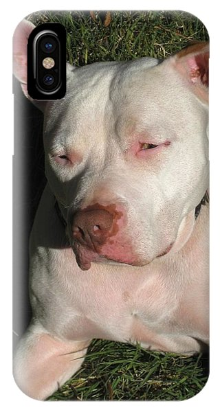 Pitbull iPhone Case - Brown Nosed Dog by Sue Halstenberg